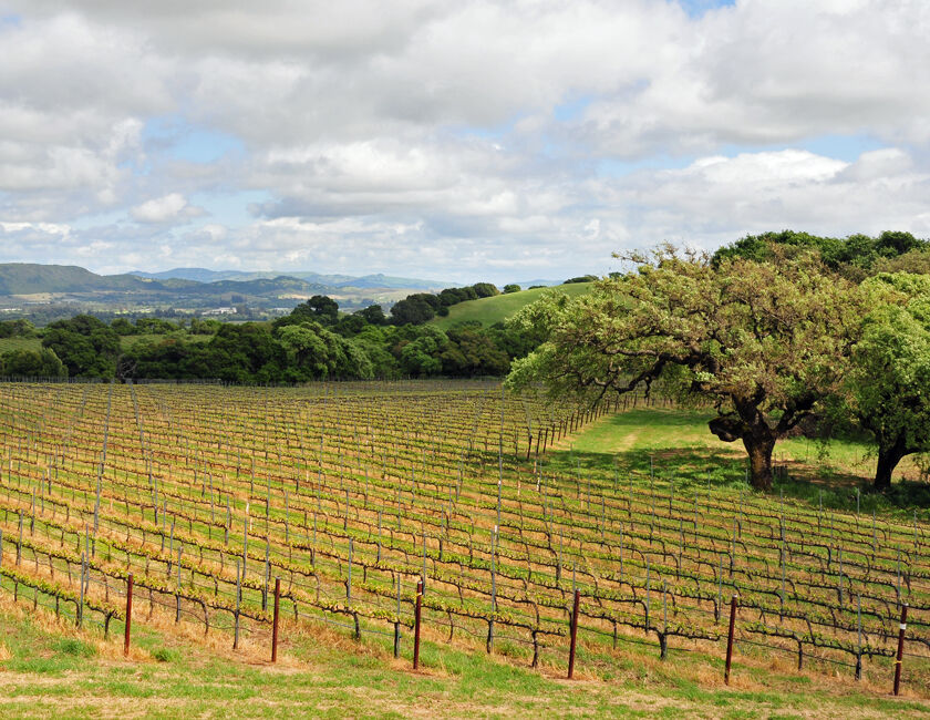 etude estate vineyard in carneros