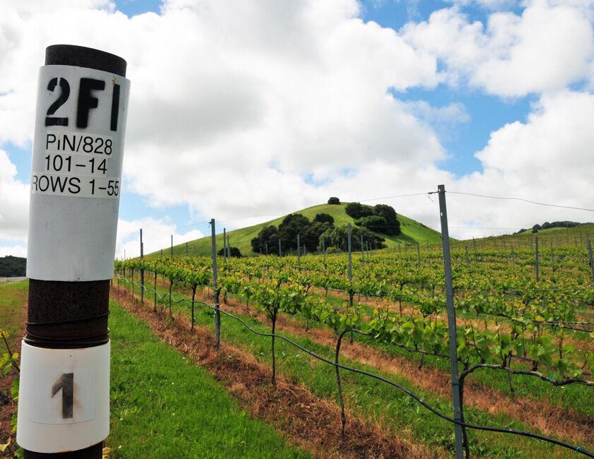 vineyard block marker at grace benoist ranch vineyard