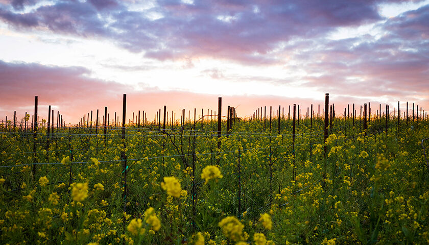 the natural habitat of the land was preserved as the vineyard was developed